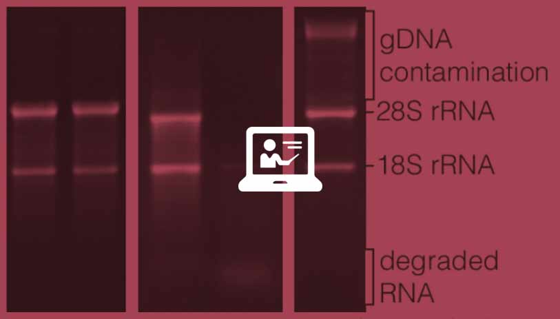 alterations-workingwith-rna-2