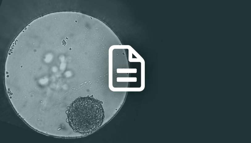 cancer drug screening