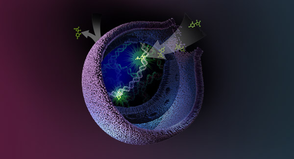 cell-health-screening-cell-viability-and-cytotoxicity