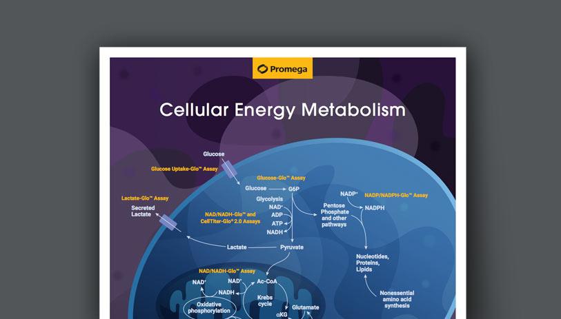 energy-metabolism-wall-chart-tile