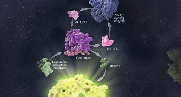 nucleotide-and-co-factor-detection-products