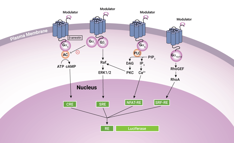 overview of gpcr signaling pathways