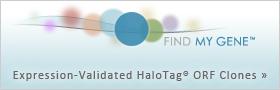 FindMyGene Expression-Validated HaloTag ORF Clones