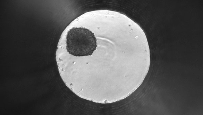 11-luminescent-cell-health-assays-for-tumor-spheroid-evaluation