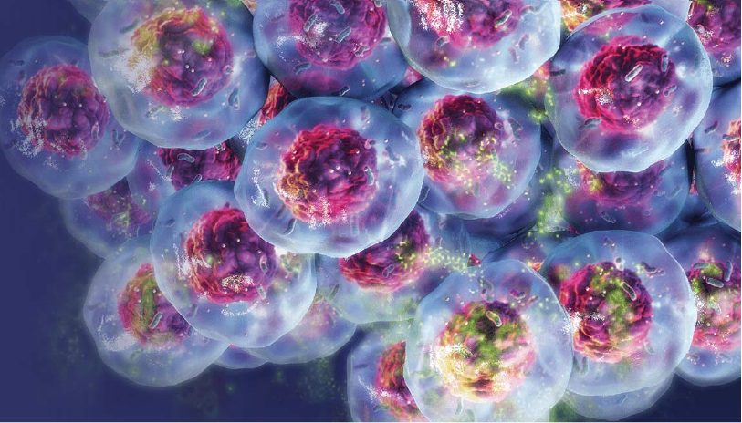 5-high-throughput-drug-screening-using-3d-cell-cultures