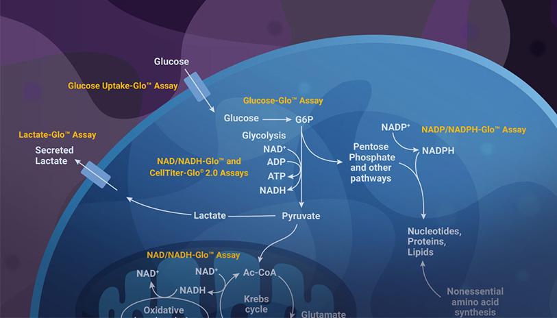 lipid-metabolism-webinar-pathway