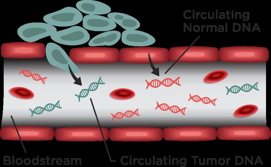Circulating DNA