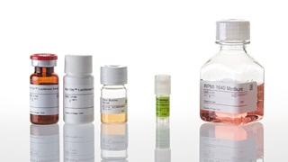 J1651_T-Cell-Activation-Bioassay--IL-2-_3
