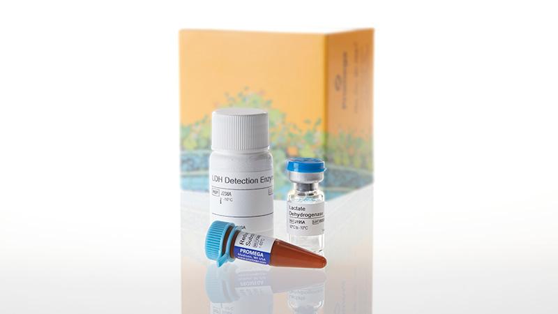 J2380_LDH-Glo Cytotoxicity Assay-10ml_3