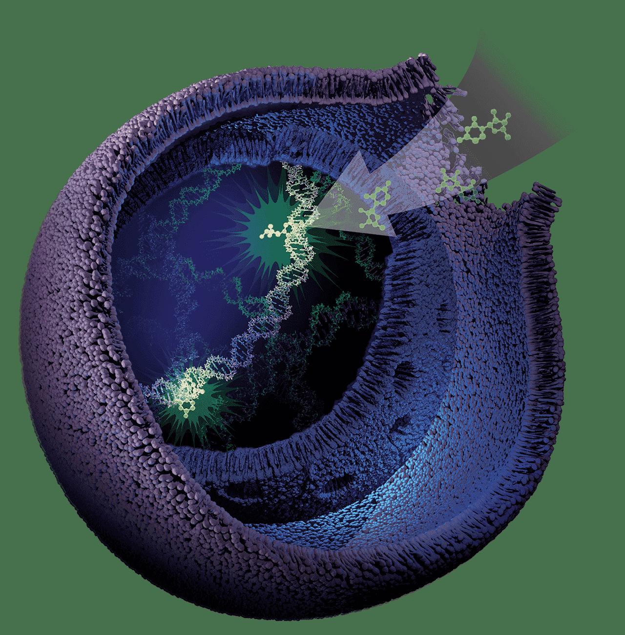 CellTox-Green cell death assay Image