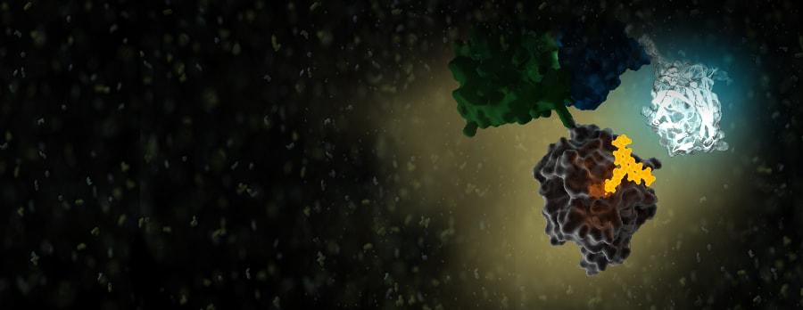 32612632-L1-NanoBRET-PPI-Overview-Image