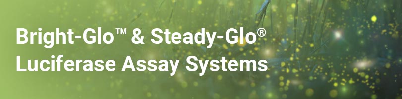 bright-glo-and-steady-glo-luciferase-assay-systems