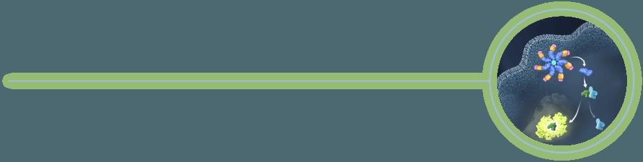Caspase-Glo Assay Technology Example