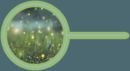 Glowing Fireflies in Field