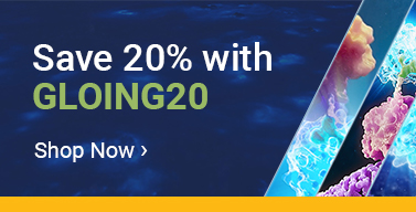 gloing20-wnb-ws2021-na
