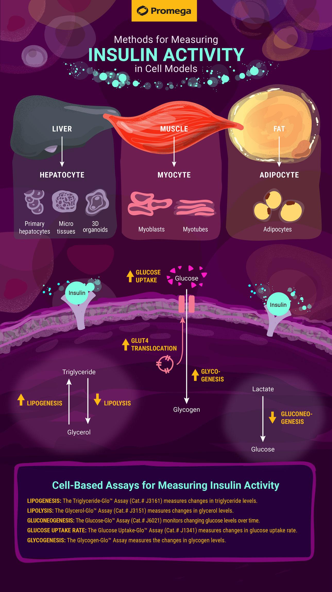 insulin-activity-assays-infographic-2020-05