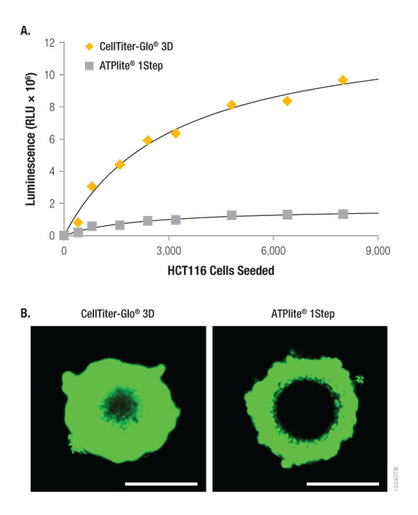 Lytic capacity of CellTiter-Glo 3D compared to ATPlite 1Step Reagent 12330TB