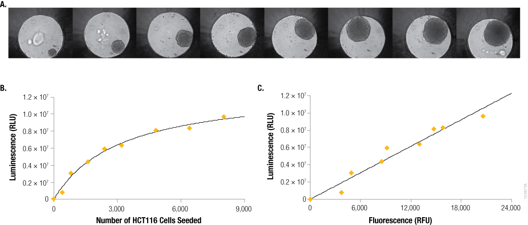 CellTiter-Glo 3D Assay: ATP Content in 3D Cultures is Proportional to DNA Content and Viable Cell Number 12387TA