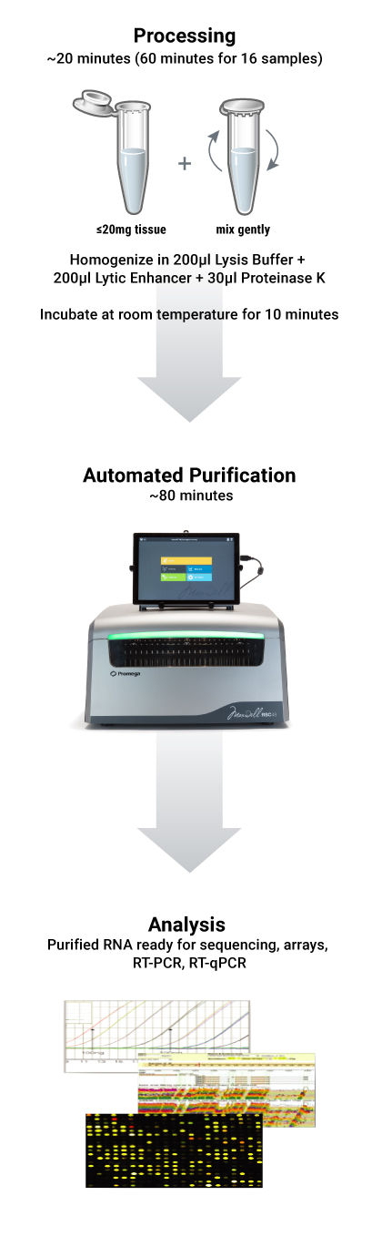 Automated miRNA extraction from tissue protocol