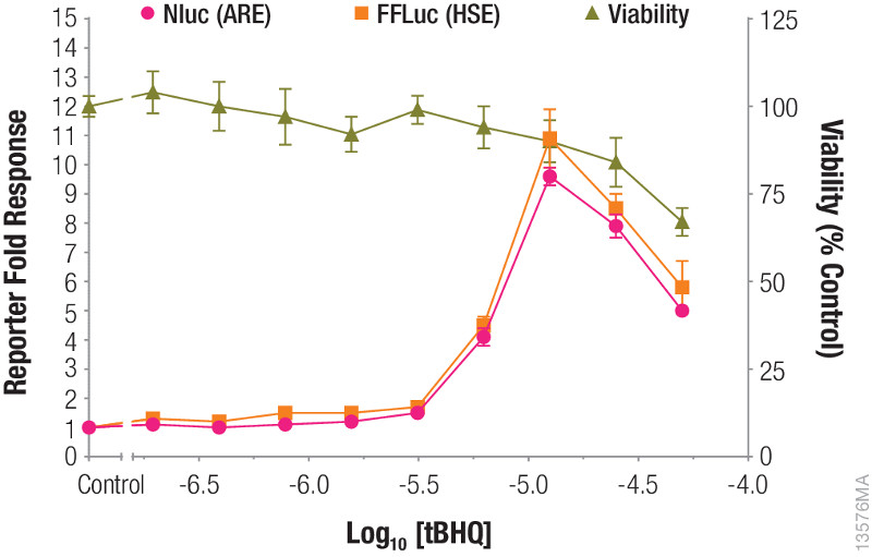 Combining reporter and cell viability assays.