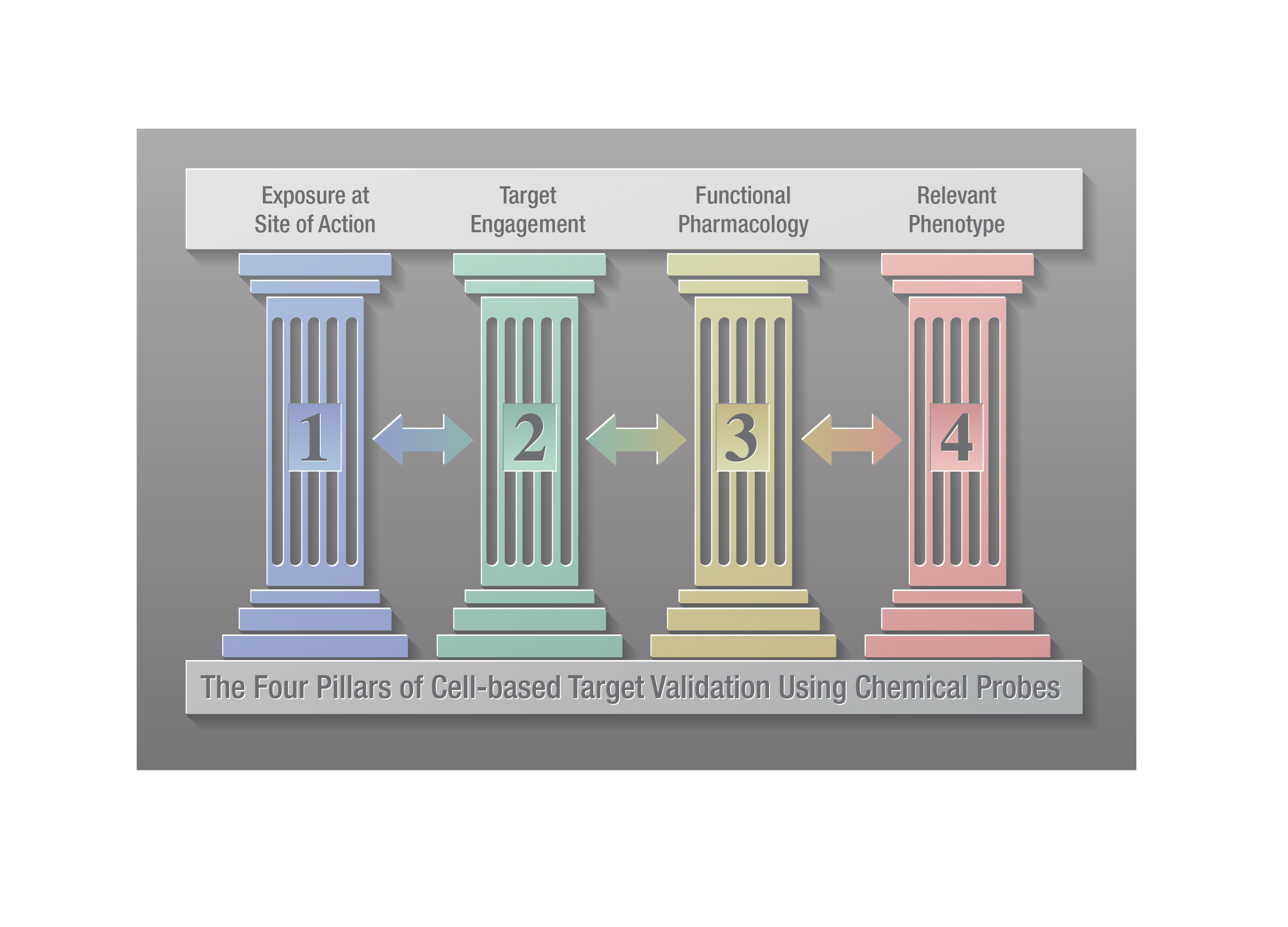 The four pillars of cell-based target validation using chemical probes