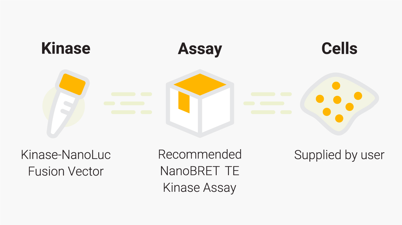 NanoBRET TE Intracellular Kinase Assay requires kinase-NanoLuc fusion vector and cells supplied by user