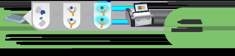 Lumit SARS-CoV-2-Immunoassay workflow is rapid and scalable