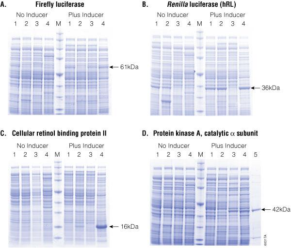 Comparison of protein overexpression.