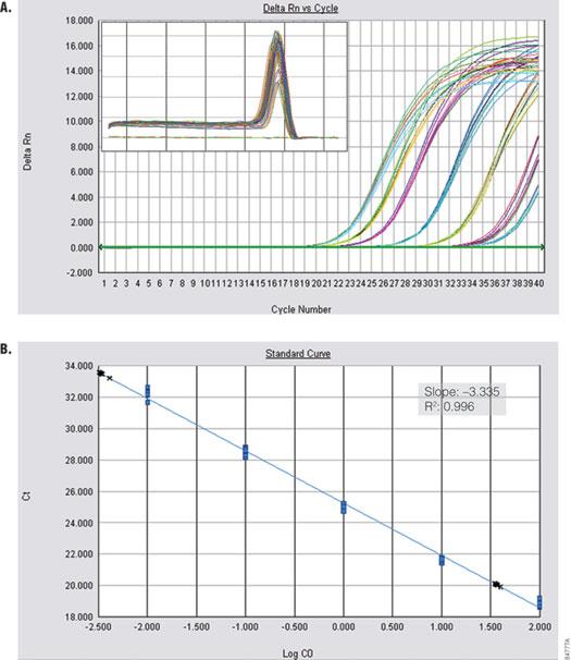 Amplification of Alpha V from cDNA.