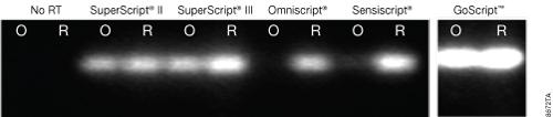 Reverse transcription of an 8.9kb APC transcript.