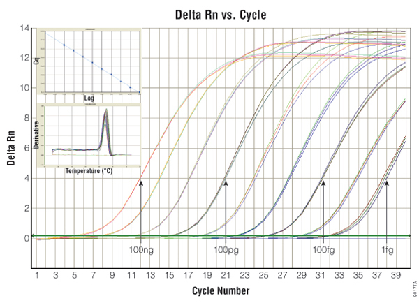 A6010 2-Step Real-Time PCR & qPCR Kit