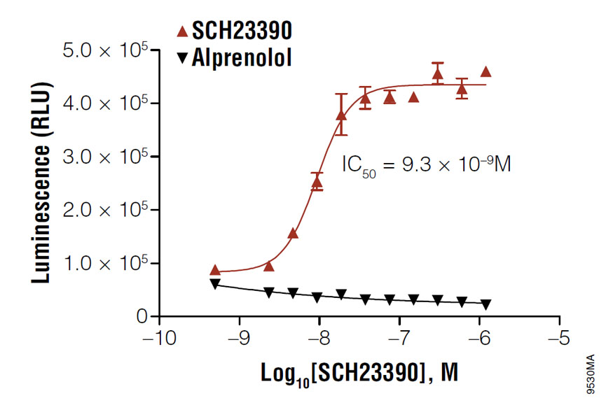 Determining the IC50 value of SCH23390 in D1 receptor-expressing HEK293 cells.