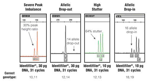 Stochastic effects that randomly occur when PCR amplifying low amounts of DNA using an increased number of PCR cycles.
