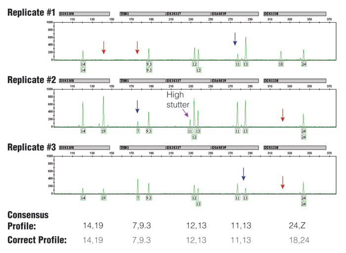 Three replicate PCR amplifications of a 10 pg single-source DNA template using the Identifiler kit and 31 cycles.
