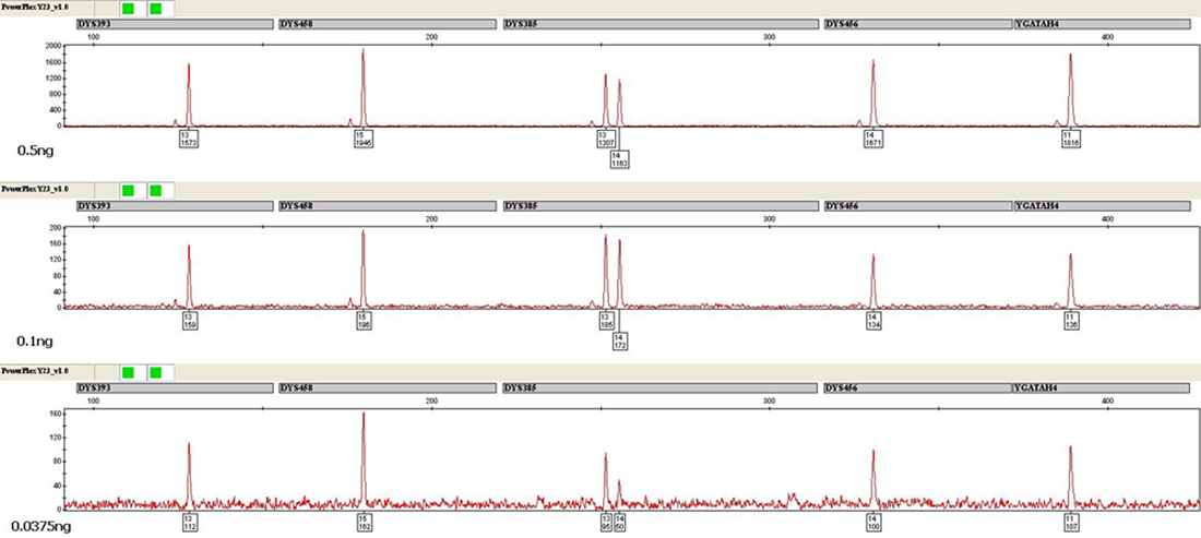 Amplification of 0.5ng, 0.1ng and 0.0375ng of male DNA using the PowerPlex Y23 System.