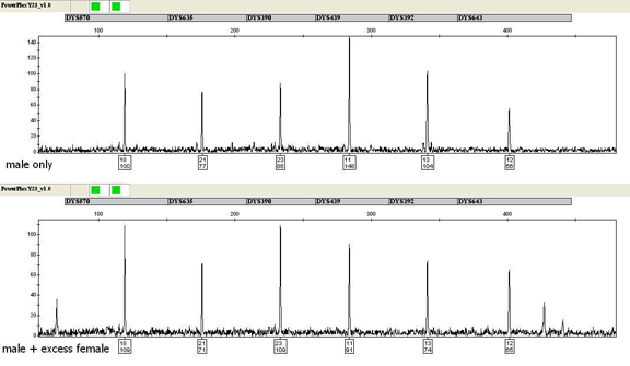Amplification of 0.0375ng of male DNA and a male/female mixture sample containing 0.0375ng of male DNA and a ~65,000-fold excess of female DNA using the PowerPlex Y23 System.