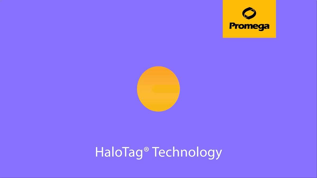 28440899-HALOTAG-ANIMATION-fallback