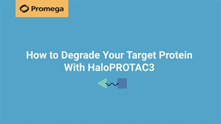 How To Degrade Your Target Protein With Haloprotac3