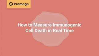 How To Measure Immunogenic Cell Death In Real Time