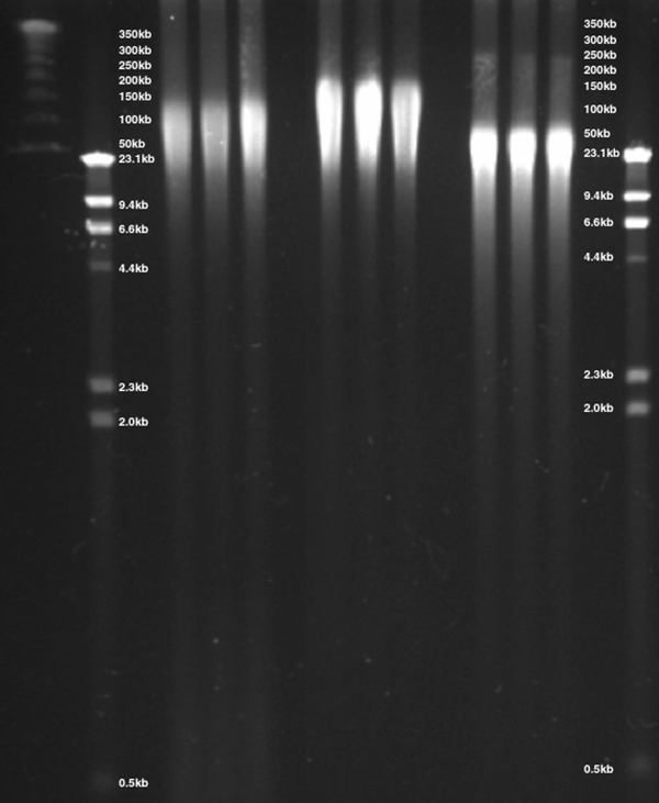 Comparison of DNA isolated using 3 different purification methods