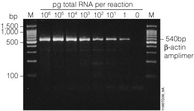 Optimization of amount of input RNA in RT-PCR