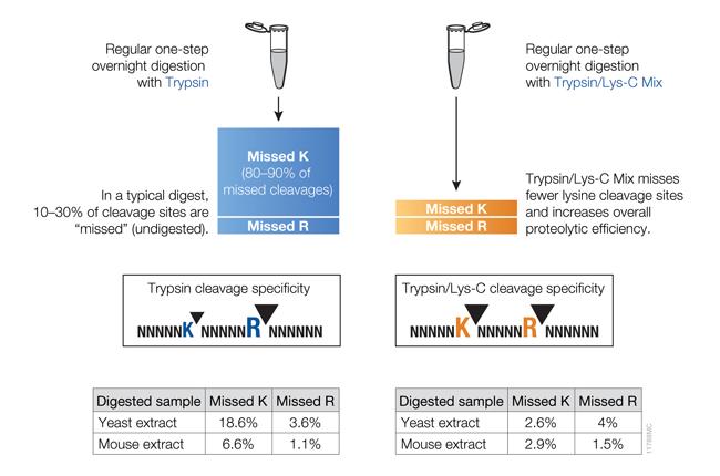 trypsin digestion protocols for mass spec