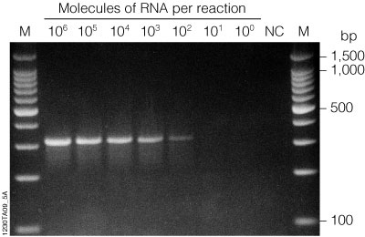 Effect of magnesium concentration on PCR