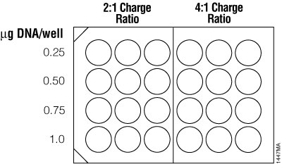 Suggested plating format for initial optimization of cationic lipid transfection conditions