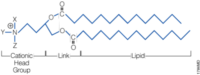 The general structure of a synthetic cationic lipid