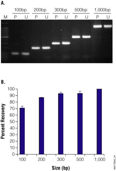 PCR product purification using Wizard SV gel and pcr cleanup system