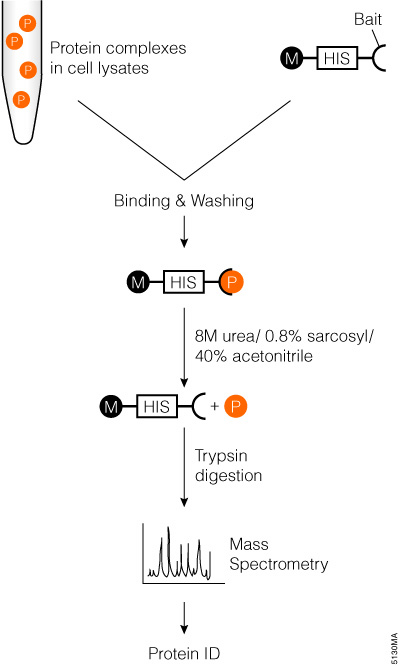 pull down assay with trypsin digestion and mass spec