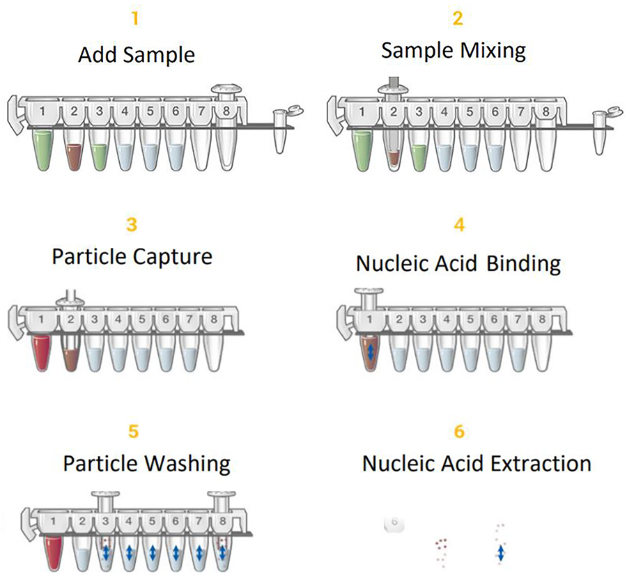 How nucleic acid is purified using Maxwell cartridges
