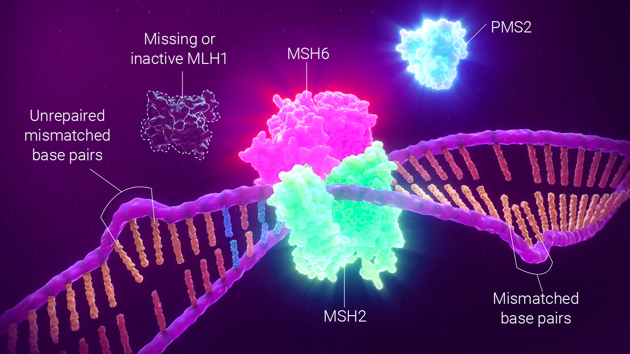 Detecting mmr by ihc