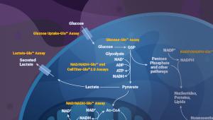 58106579-lipid-metabolism-webinar-featuredcontnet-300x170